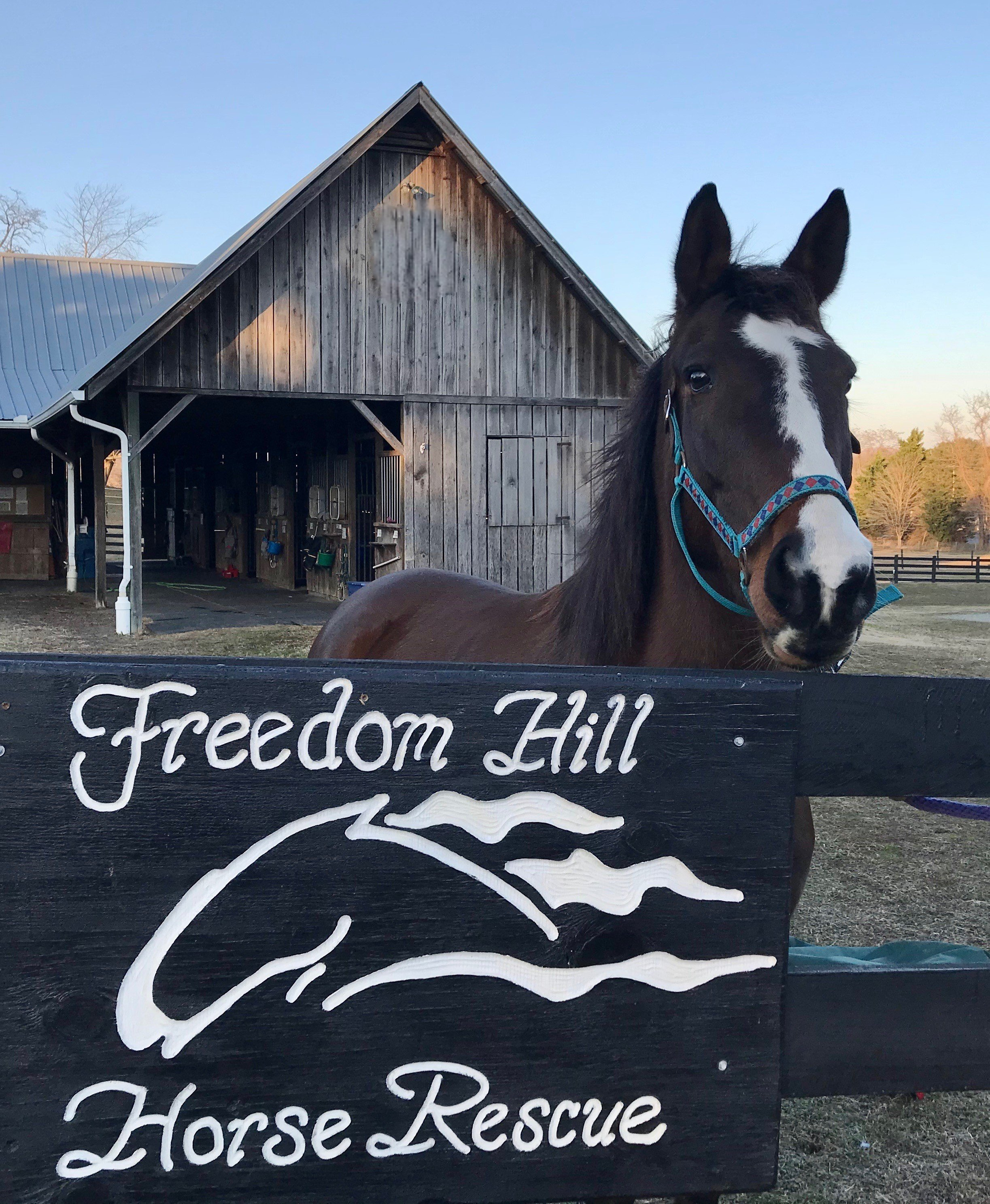 Freedom Hill Horse Rescue Of Owings Maryland Is Verified By Global Federation Of Animal Sanctuaries Global Federation Of Animal Sanctuaries